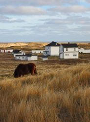 Horse beside Sable Station
