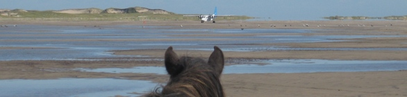 Horse and Plane